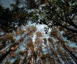 fotografieren lernen in der natur