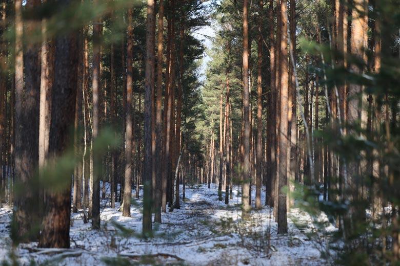 Waldfoto im Winter